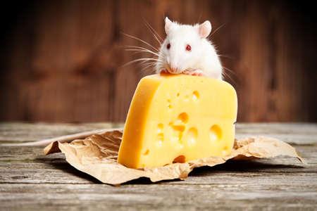 rata caricatura: Rata del animal doméstico con un gran trozo de queso, fondo de madera