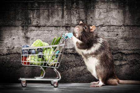 rata: Rata linda con un carrito de compras en una tienda Foto de archivo