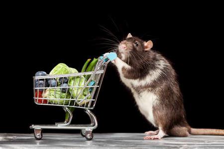 상점에서 장바구니가있는 귀여운 쥐