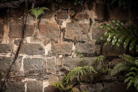 rainforest background: Tropical rainforest background