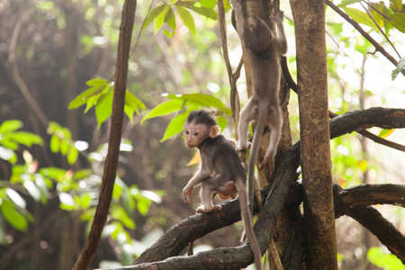 macaque: Young macaque monkeys in a rainforest Stock Photo
