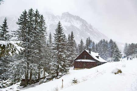 winter wood: Winter in the mountains in Zakopane, Poland