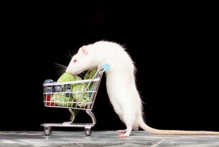 rata: Rata linda mascota con un carrito de compras sobre fondo oscuro