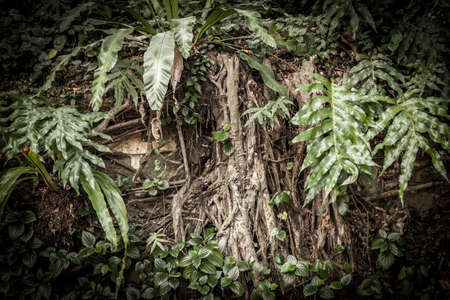 rainforest background: Tropical rainforest background with roots and leaves Stock Photo
