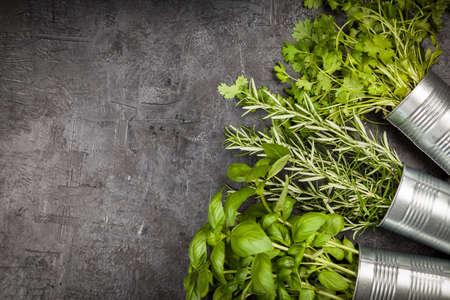 home grown: Fresh herbs on grey background - basil, rosemary, coriander