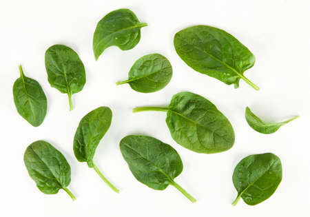 Baby spinach leaves Banco de Imagens - 97684216