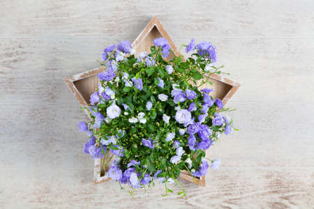 Campanula flowers in a golden pot Stock Photo