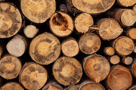 Fireplace wood logs side texture