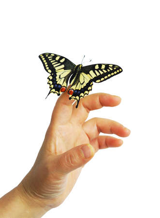 A butterfly on finger in white background. photo