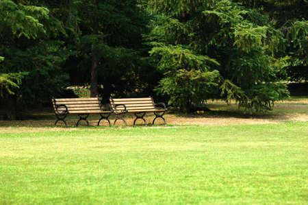 grassplot: two bench under the tree whith grassplot in park.