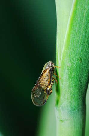 A side view of cicada on green grass caudex.