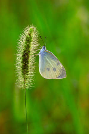 erection: A butterfly parked in the grass