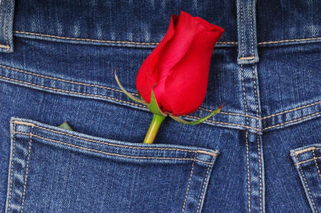 A rose tucked in a denim pocket. photo