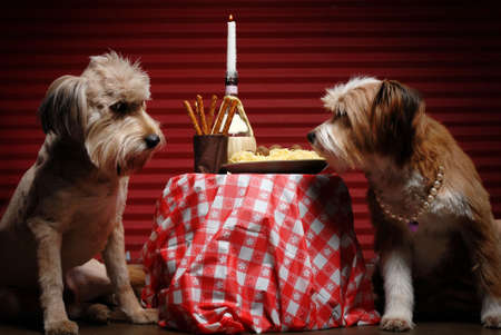 Two dogs having candlelight dinner in alley Stock Photo - 2558395