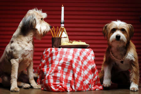 Two dogs having candlelight dinner