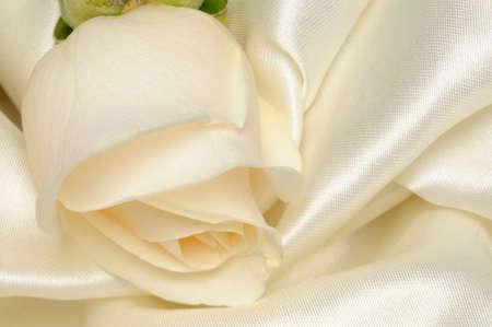 White rose on white satin