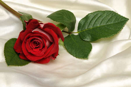 Red rose with stem on white satin Stock Photo