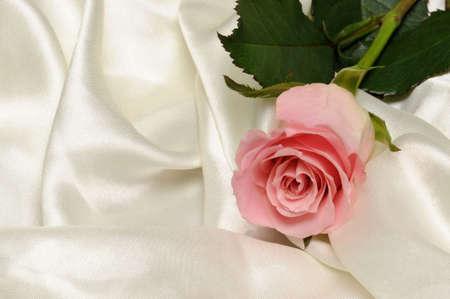 Pink rose on white satin