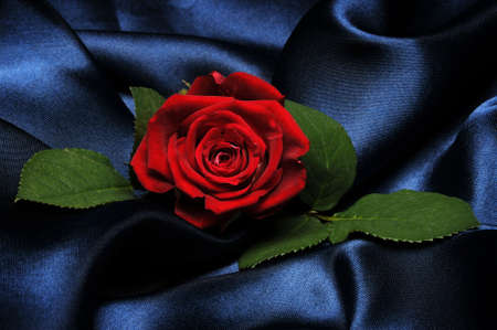one sheet: Red rose on blue satin Stock Photo