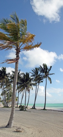 image of a beach with tropical trees photo