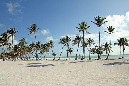 image of a large beach with tropical trees photo