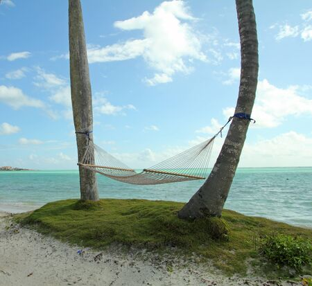 image of a hammock between two palm trees on a beach