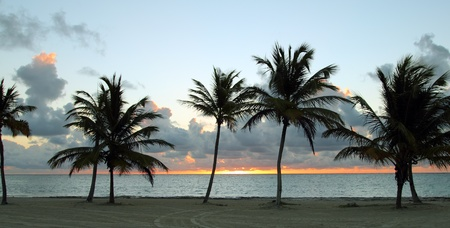 beach with trees at sunset Stock Photo - 12597525