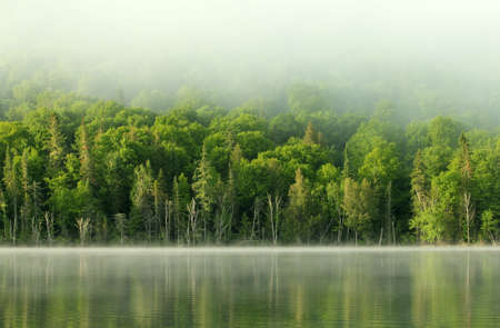 very calm lake and forest in the morning photo