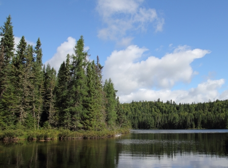 landscape of a wild lake in the forest Stock Photo