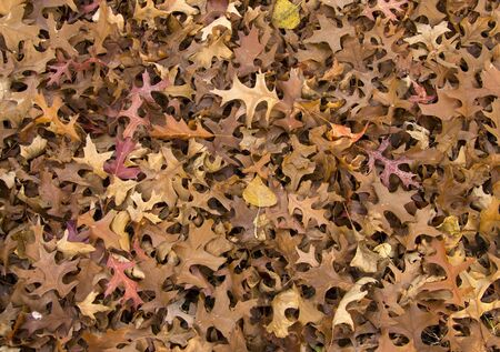closeup of a pile of leaves at fall Standard-Bild