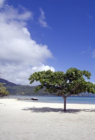little tree on a polynesian beach Stock Photo
