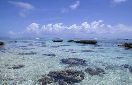 seascape with crystal water and coral reef