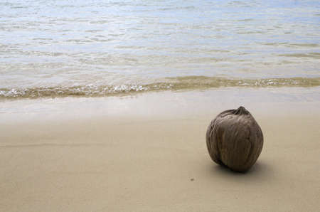 closeup of a coconut on a beach Stock Photo - 16256117