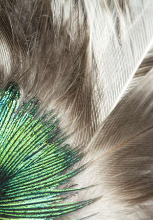 macro image of green and grey feathers Stock Photo - 16942400