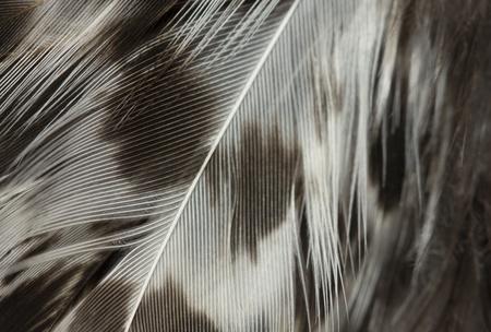 macro image of black and white feathers Stock Photo - 16942402
