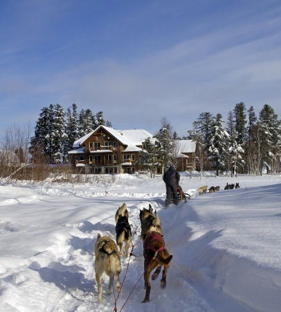 dog sledding in a forest at winter Stock Photo - 17091844