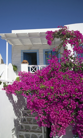 closeup of white luxury accommodation with flowers in santorini greece