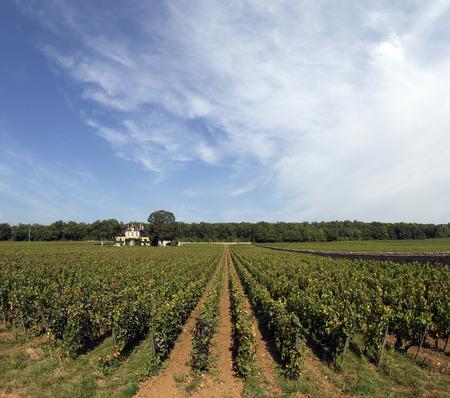bourgogne: great vineyard in bourgogne france