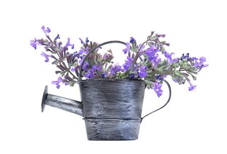 espliego: Antiguo regadera con flores de color púrpura aislado en blanco