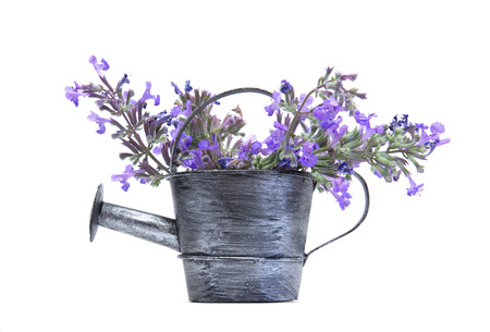 Old watering can with purple flowers isolated on white