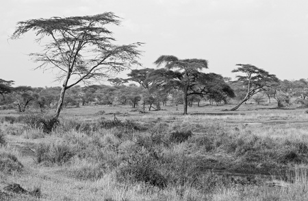 Black and white landscape of Tarangire national park