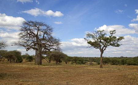 Baobab tree in Tarangire national park, Tanzania