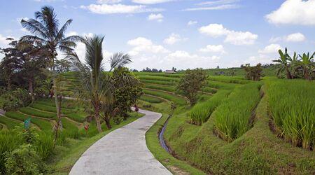 Jatiluwih famous rice fields on Bali island, Indonesia