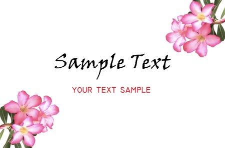 Adenium flower bacdgroun for your text photo