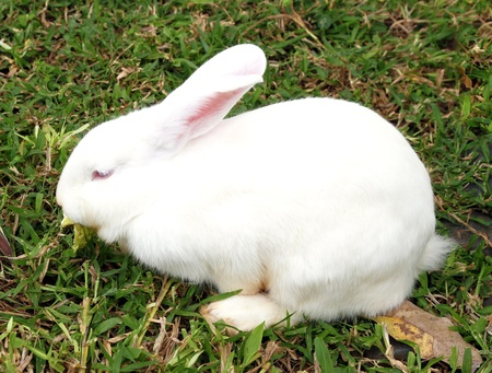 White rabbit in a green grass Stock Photo - 13740088