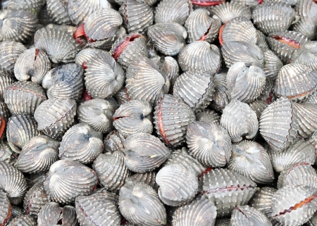 Cockles at the market ,Thailand photo