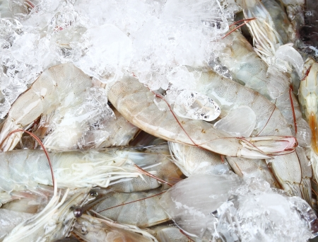 Fresh shrimps in ice on the market photo