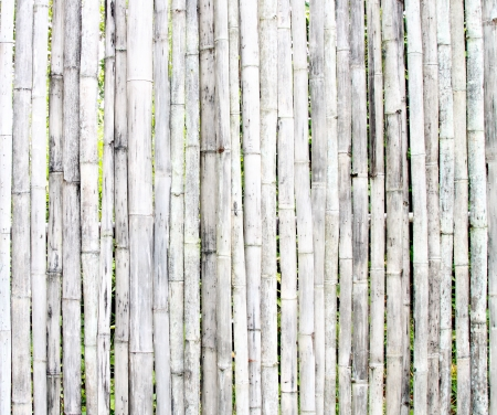 white bamboo texture wall background photo