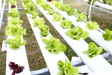 many kinds of soilless or hydroponic system Stock Photo - 17212313