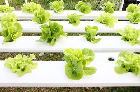 many kinds of soilless or hydroponic system photo